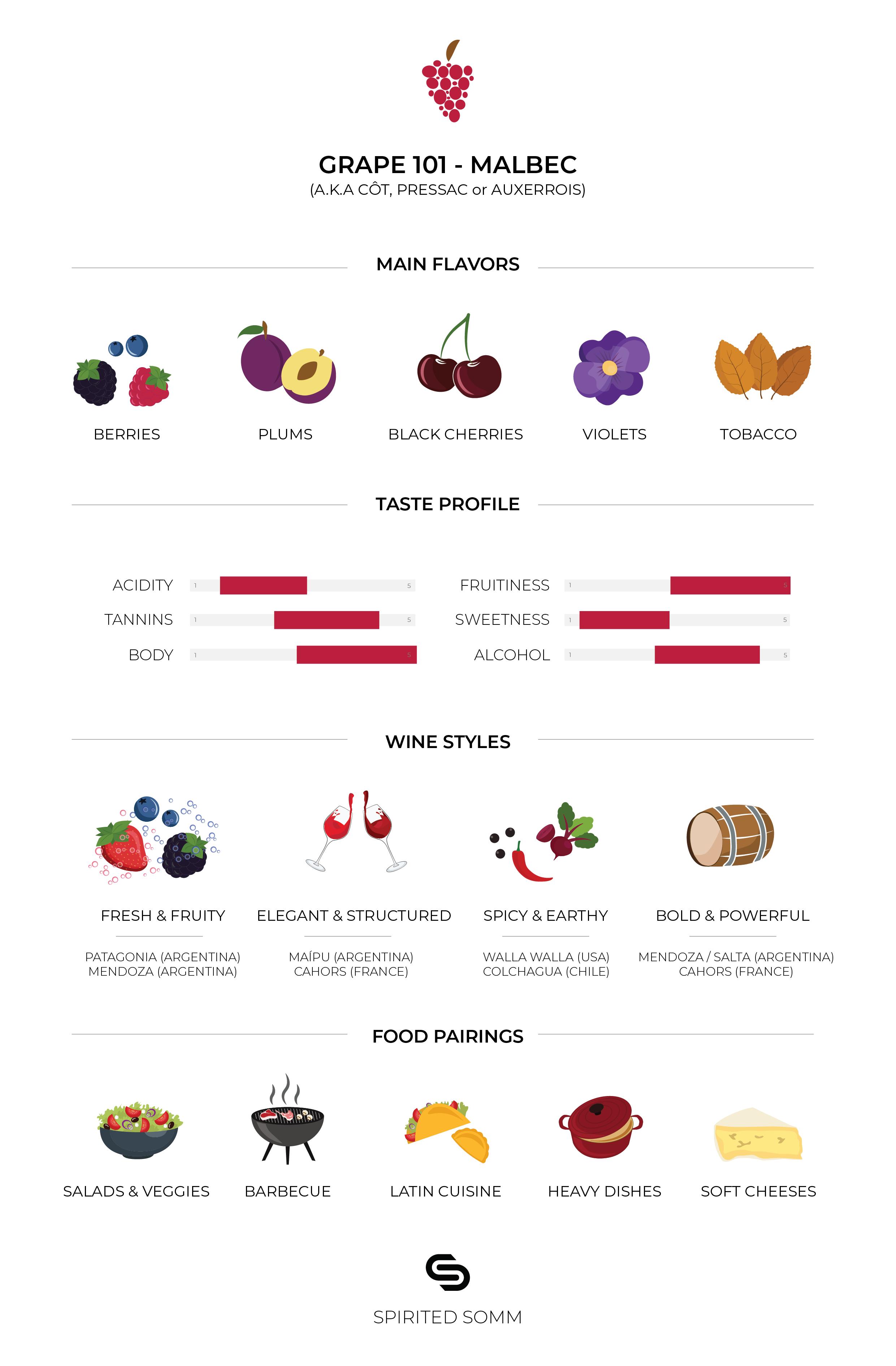 Grape Infographic: Malbec | Copyrights @SpiritedSomm